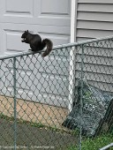 When Smokey eats on this gate, he wants us to wait until he's done and give him another peanut. We are well trained.