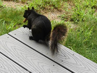 Smokey got his peanut.