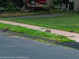 Bunnies apparently like to eat at the edge.
