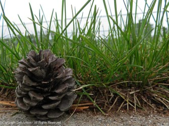 The storms keep shaking the pine cones out early.