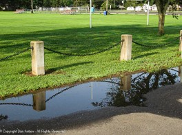 Usually, this puddle is dry before we get to it. Lately, we've been walking as soon as the rain stops.