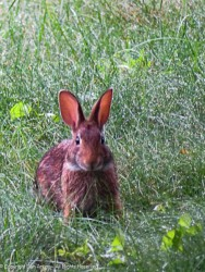 We are still seeing bunnies, but this one is from July
