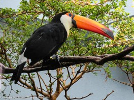 This might be Toucan Sam.