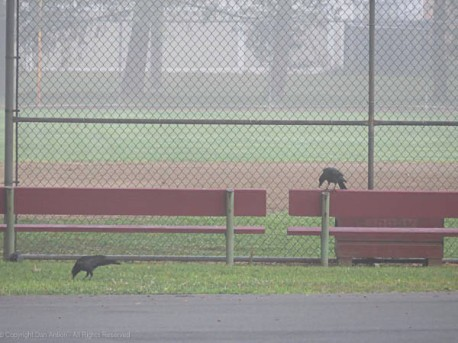 """""""Think this fog will lift in time to play, Jinx?"""""""