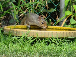 We have three of these in the yard. Some days, it's the only water around here.