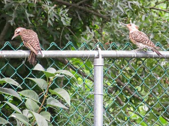 This is the first time I've seen two flickers