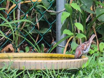 I'm not sure who this guy is, but I have to add some water to the birdbath.