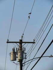 Two birds in one photo.Birds and transformers for Peter.