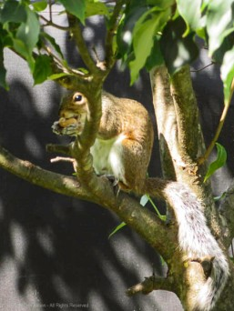 Peanut in hand, retreat to the tree to eat.