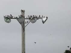 """""""Where are those crows. How long are they going to make us wait?"""""""
