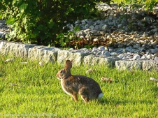 Hang on bunny. One click for River. OK, you can go now.