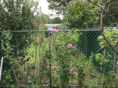 The last section of fence to receive privacy slats is the short section facing the front yard. Before.