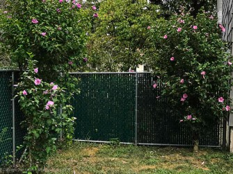The last section of fence to receive privacy slats is the short section facing the front yard. After.