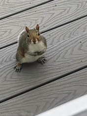 """""""If you guys are coming outside, could you bring some peanuts?"""""""