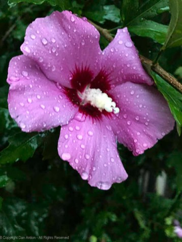 We had quite a bit of rain on Thursday.