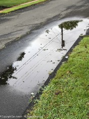 Our puddle :-)