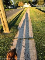 Our long shadows are back