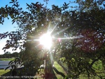 The sun was bright. The apple tree seems to appreciate that.