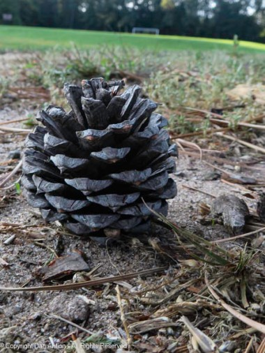 There were pine cones all over the place. This one landed straight up.