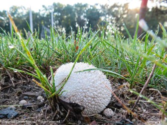 We have seen more kinds of mushrooms this year than ever before.