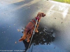 Maddie's favorite puddle
