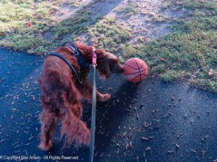 We have to know all about this basketball