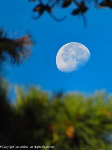 Waning Gibbous Harvest Moon