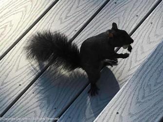 Smokey with his peanut