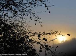 Apple tree - sun- fog